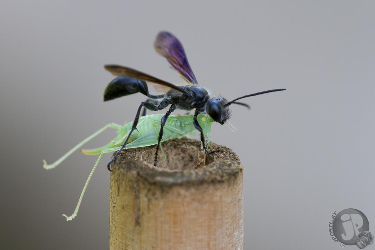 Insekt mit Futter