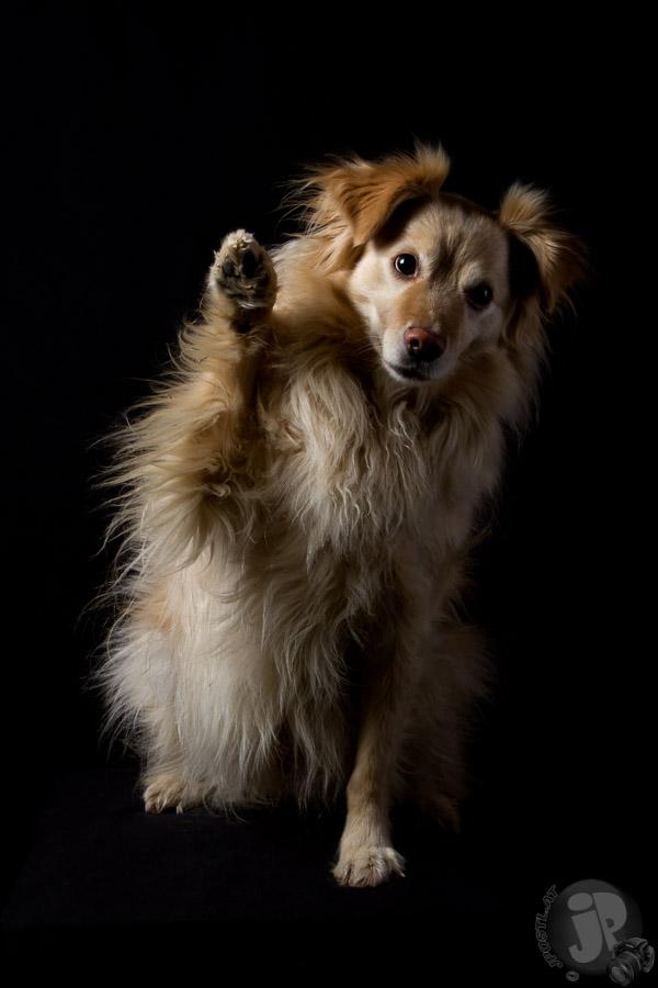 Hunde-Porträts