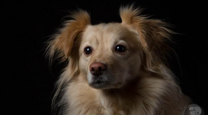 Hunde-Porträts – 31.01.2015